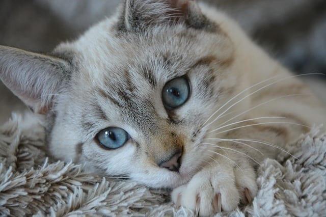 kitten after pet wellness plan visit